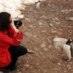 Un 1er janvier en Antarctique: rencontre avec nos amis les manchots