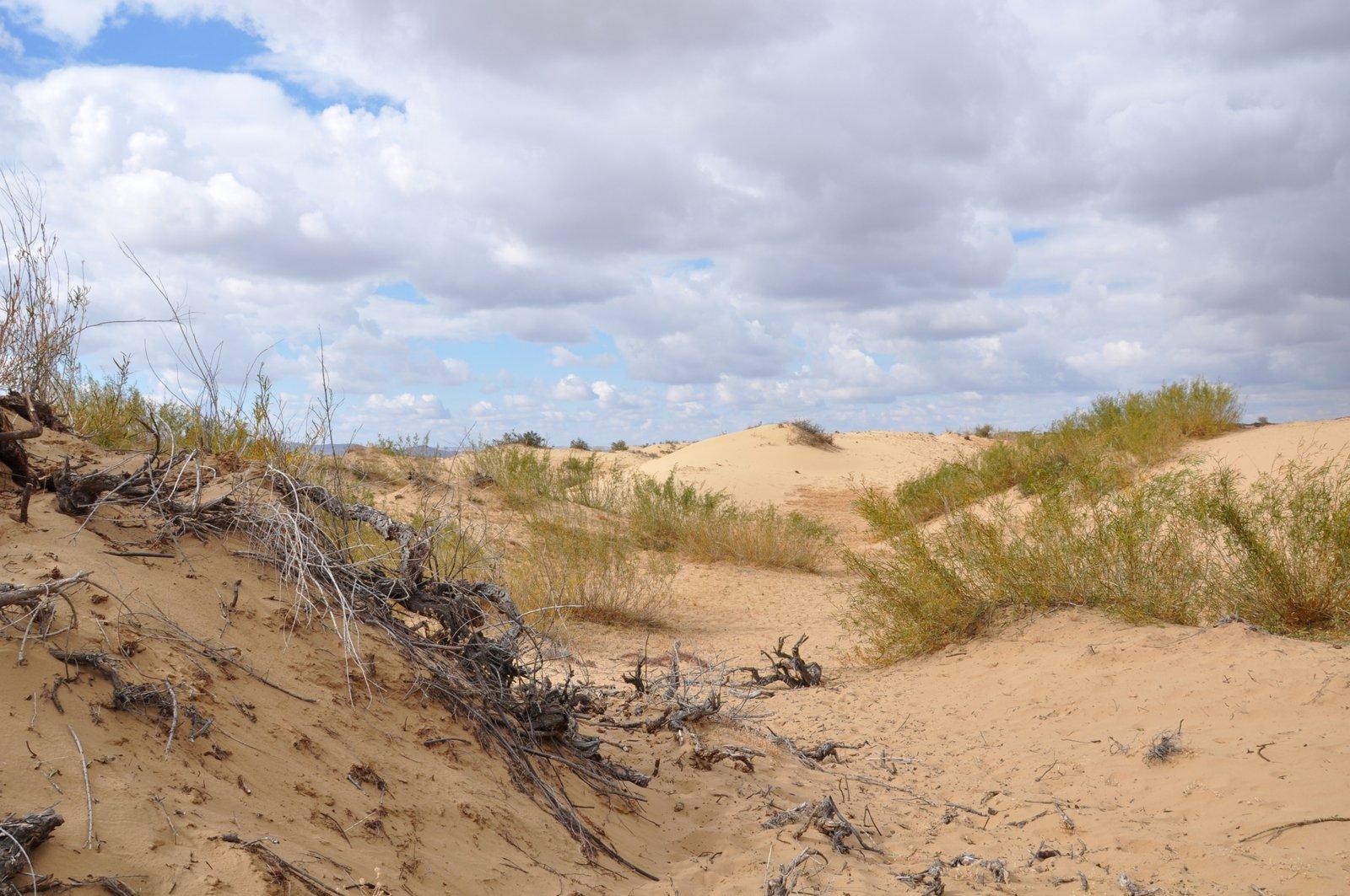 Les dunes de Mongol Els