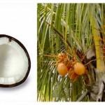 Secret de beauté en Thaïlande: la noix-de-coco