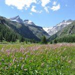 Parenthèse nature dans les montagnes de la Vallée d'Aoste
