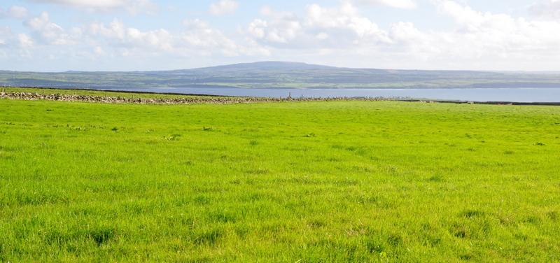 Une prairie vert Irlande (garantie sans retouche!) près des falaises de Moher