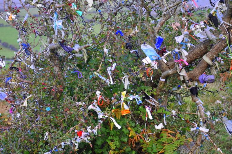Un arbre à fées dans le Connemara