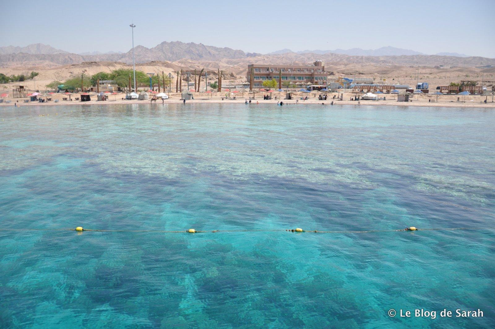 Fonds de coraux près d'Aqaba