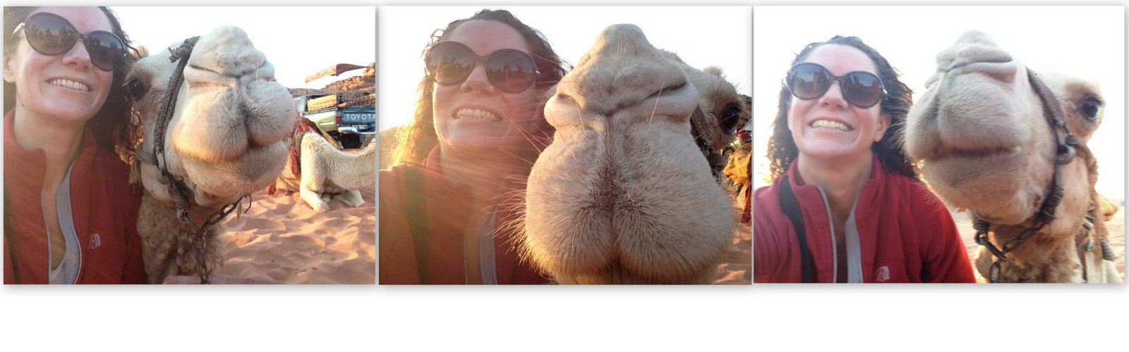 reussir un selfie dromadaire jordanie