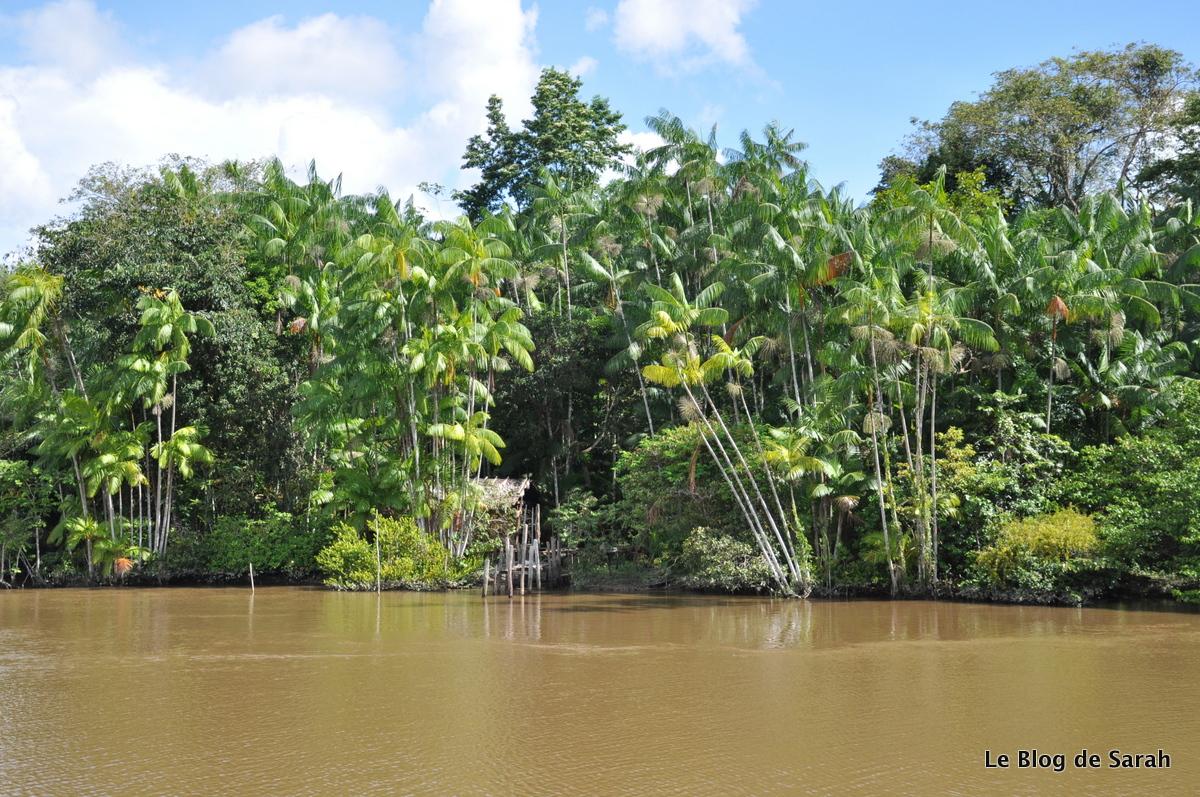 Descente de l'Amazone en bateau avec vue sur la jungle