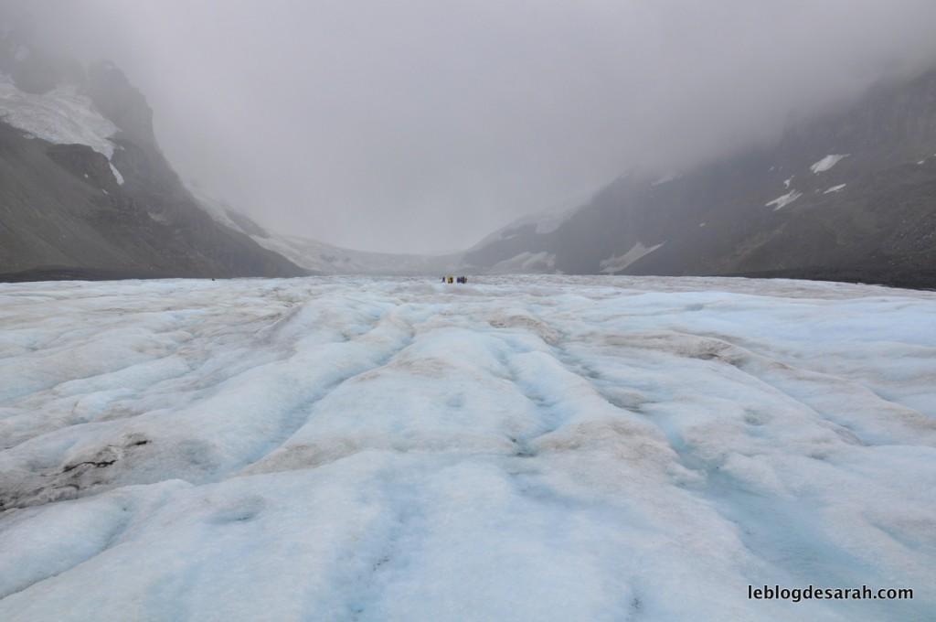 ice trekking glacier athabasca