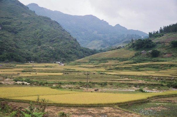 Montagnes et rizières dans la région de Sapa