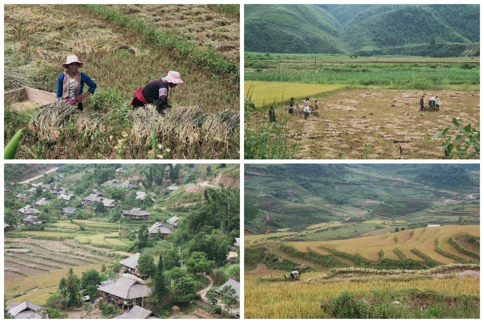 voyager-vietnam-sapa-rizieres