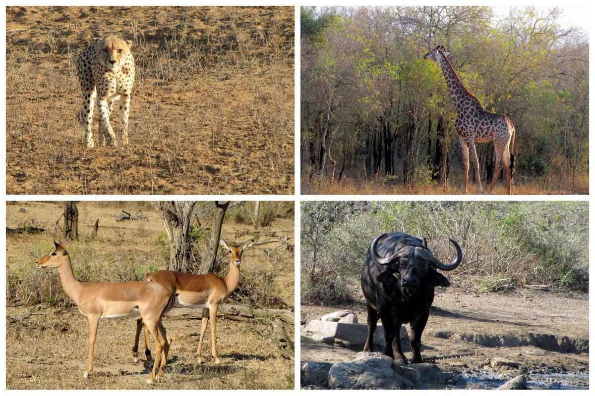 afrique-du-sud-safari