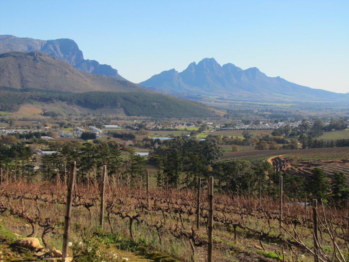 Vignes d'Afrique du Sud près de Stellenbosh