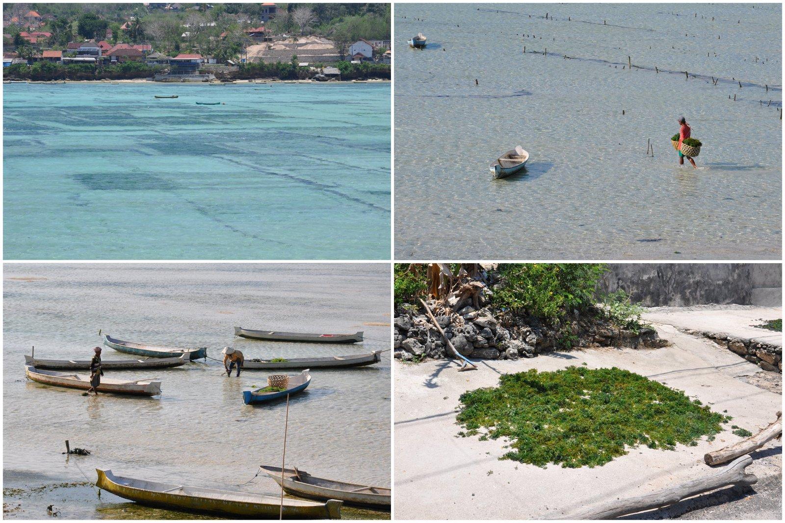 nusa-lembongan-culture-algues