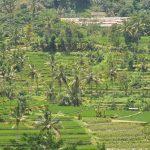10 choses à voir ou à faire lors d'un voyage à Bali