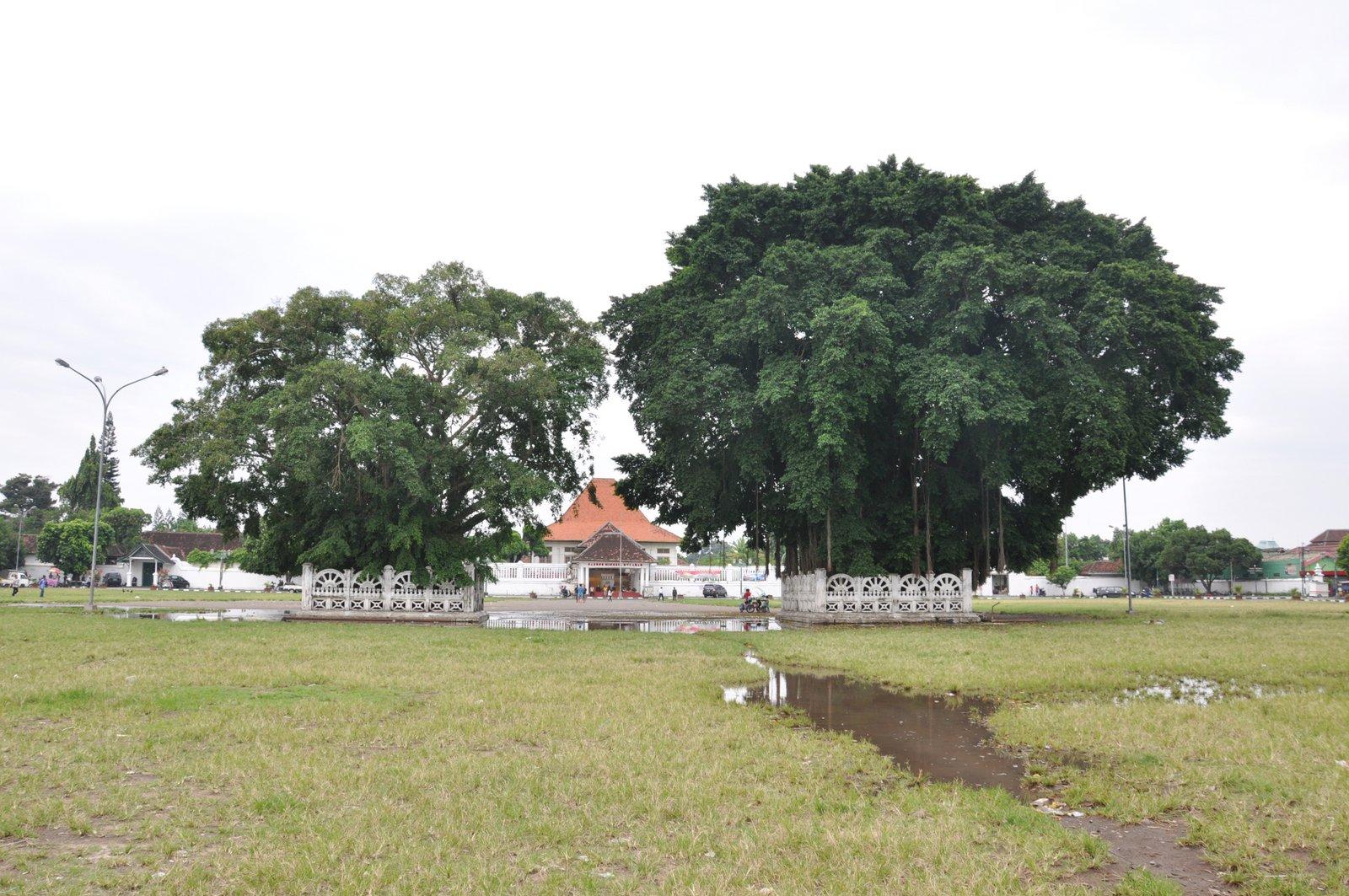 visiter-yogyakarta-banyan-tree