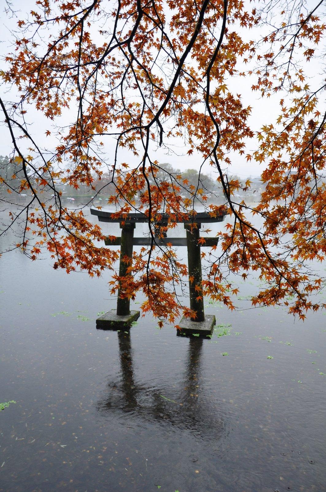 L'île de Kyushu est située au sud du Japon et c'est une destination très nature à découvrir