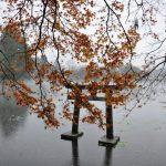 Voyage nature à travers l'île de Kyushu au Japon