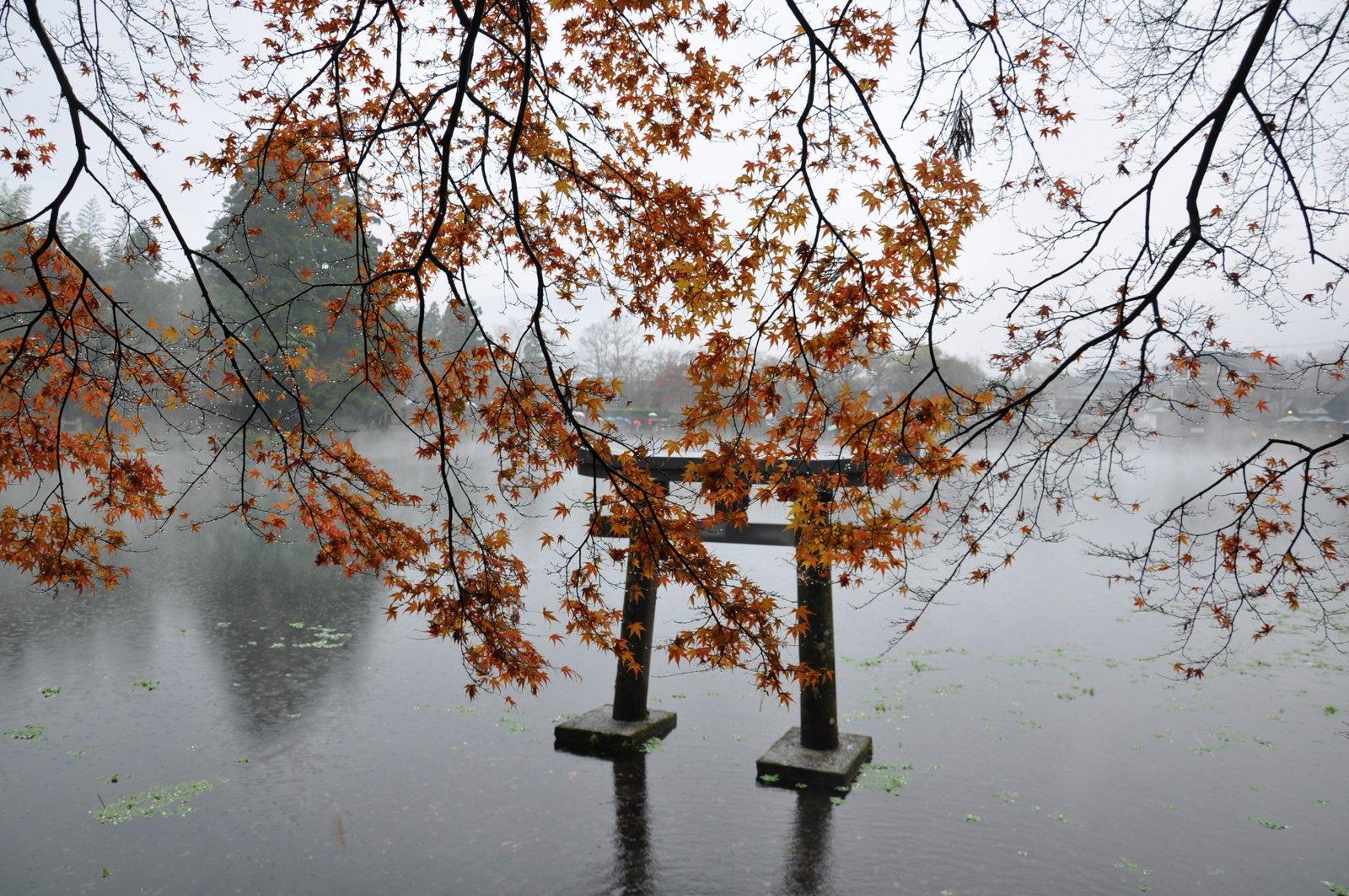 Tori sur le lac Kinrin à Yufuin