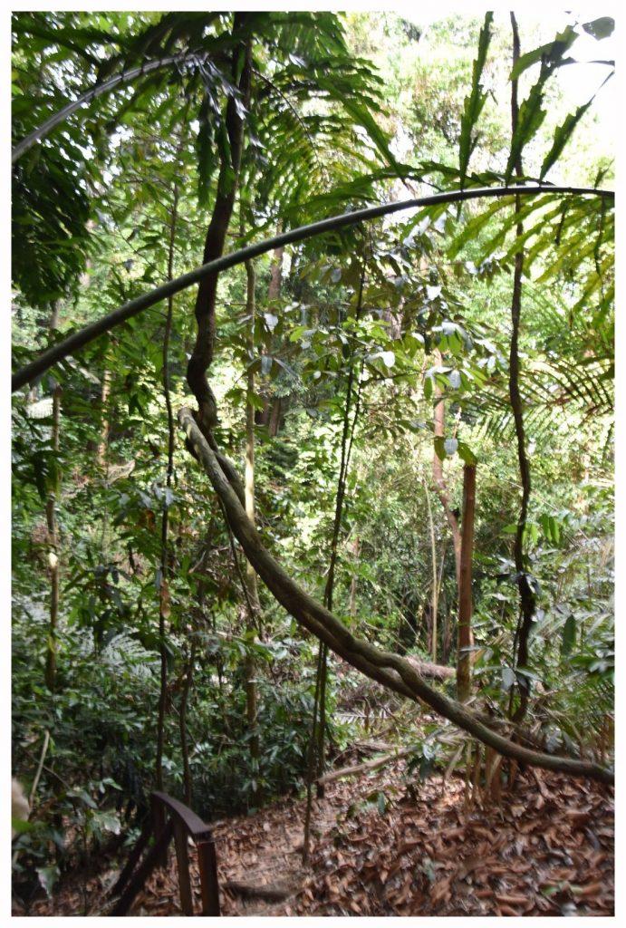 randonnée à travers la jungle équatoriale à Bornéo