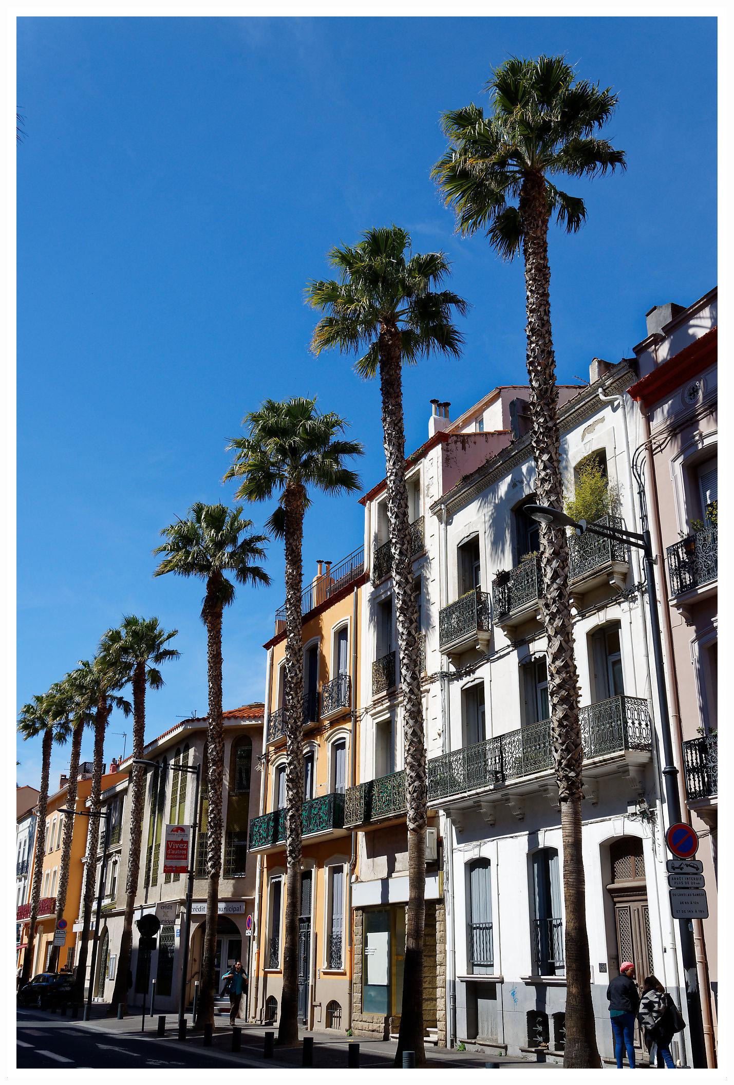 Palmiers et soleil à Perpignan