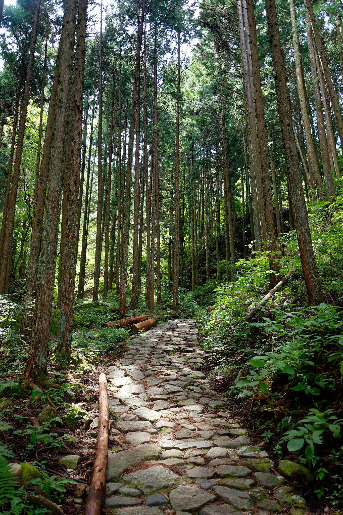 Randonnée au Japon le long du Nakasendo
